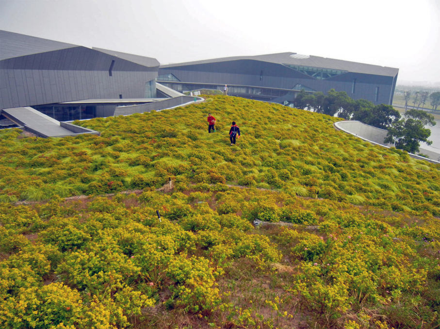 The rolling turf and plant-covered roof... (Photo: Dan Borden)