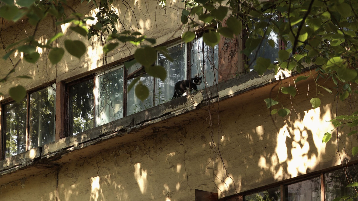 A cat prowls along the Narkomfin Building's famous ribbon strip windows. Film still.