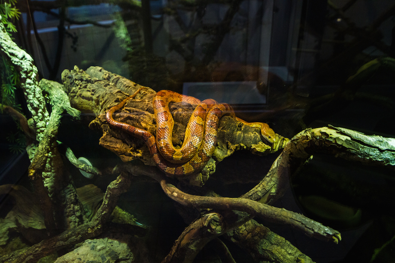 The reptile house not only protects but showcases many scaly friends seeking family homes.