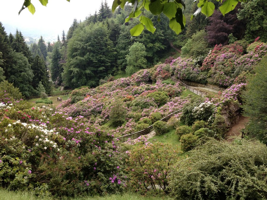 """...and relate to the evergreen rhododendrons around them."" (Photo: Norman Kietzmann)"
