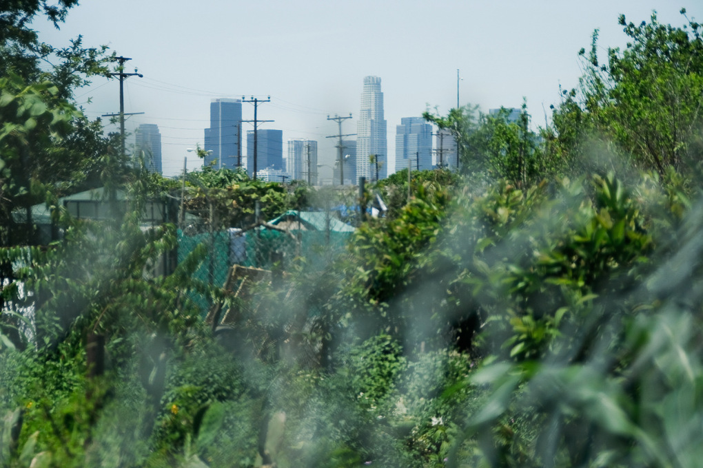 After over a decade of cultivation, the community garden became so lush that at times the surrounding city almost disappeared from view. (Photo: Travis Stanton, travisstanton.com)
