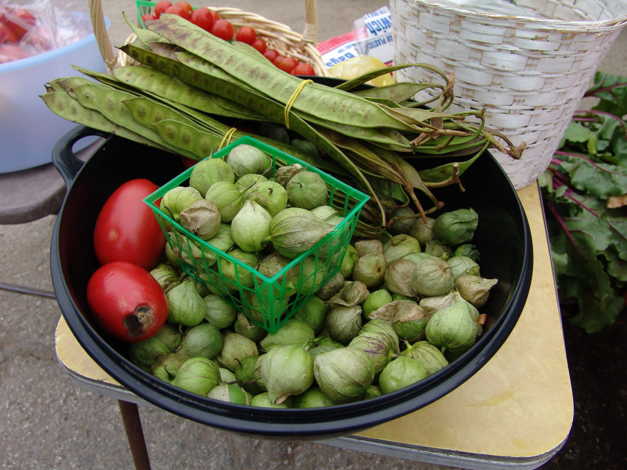 The farm specialised in ethnically diverse foods, often difficult to find in organic markets, such as the tomatillos and guajes seen here. (Photo: Jonathan McIntosh)