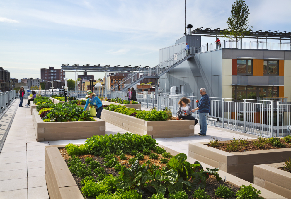 Perhaps its most noteworthy feature is the occupiable green roofscape, which allowed residents to produce 100 pounds of food in its first year of operation. (Photo © David Sundberg,