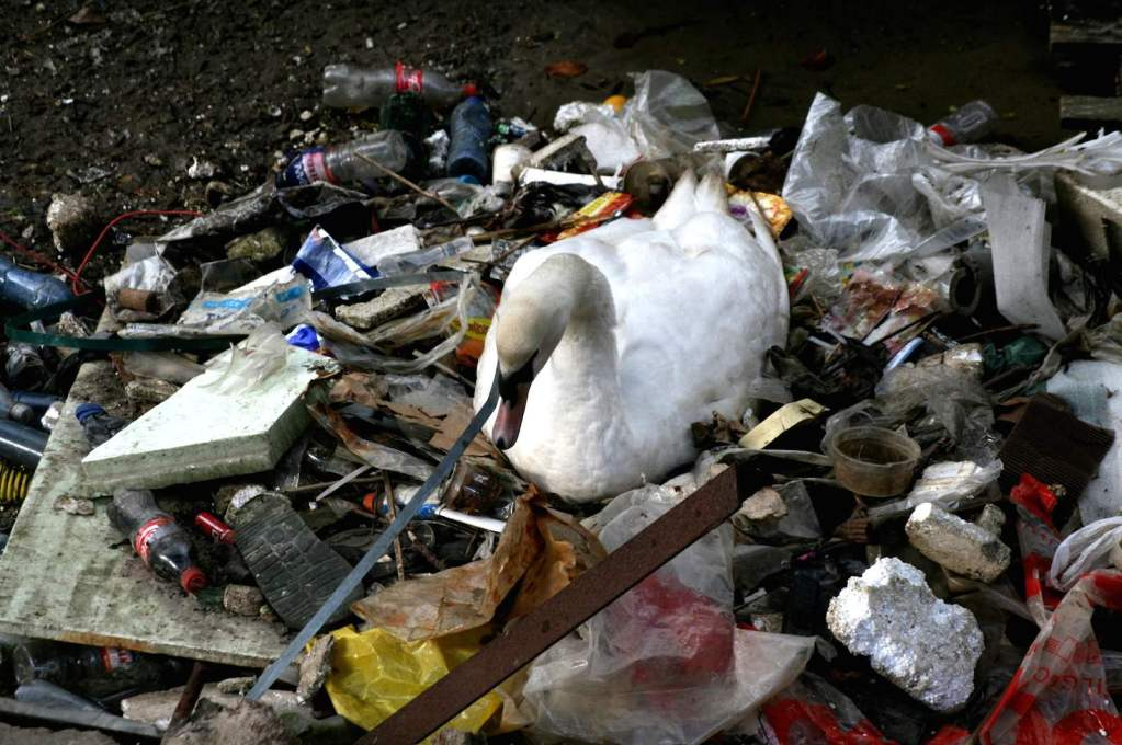 Swan in Trash. The IABR exhibition at the Natural History Museum examines how animals utilise the urban environment, initiating a debate over how the city is to be used. (Photo © Natural History Museum, Rotterdam)