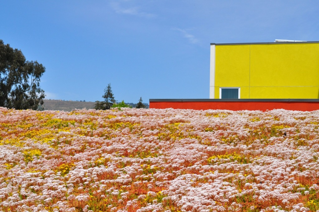 Rooftop garden in full bloom. (Photo: Moerings USA/Sempergreen - Dick Bernauer)