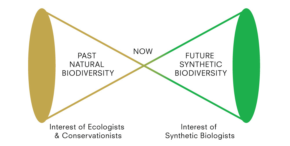 "Designing for the Sixth Extinction investigates synthetic biology's potential impact on biodiversity and conservation. Could we tolerate ""rewilding"" using synthetic biology to make nature ""better""? (Image: Daisy Ginsberg)&"