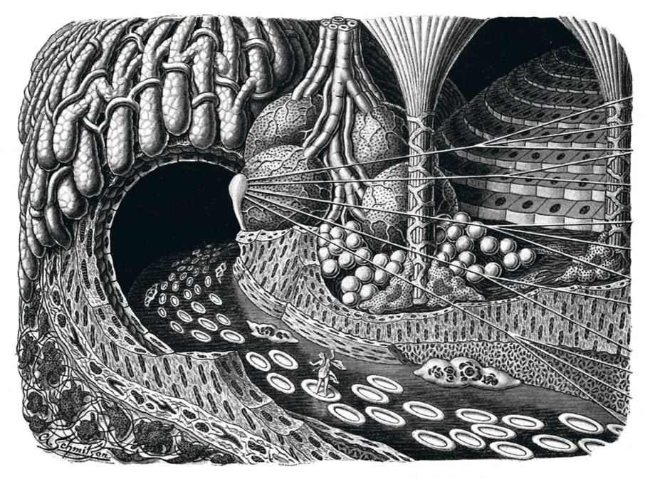 """Entering a gland cave"", 1924. ""Ideal landscape picture of the microscopic structure of the human""."