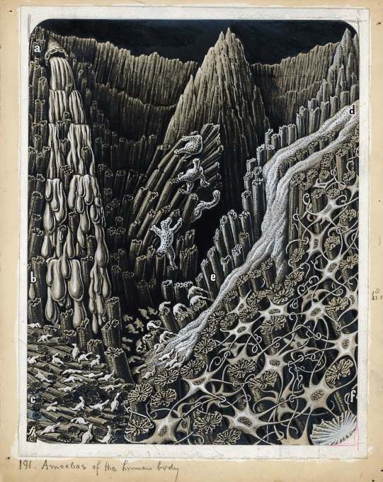 """Amoebas of the human body"", an illustration depticting the depths of a wound, 1943."
